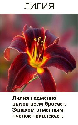 Стих о лилиях короткие