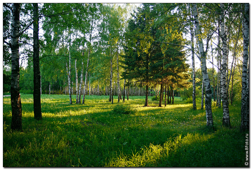 5 high-resolution photo Summer park landscape