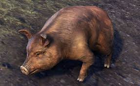 Bristlegut Piglet (pet) + 15 days ESO Plus + 750 Crown
