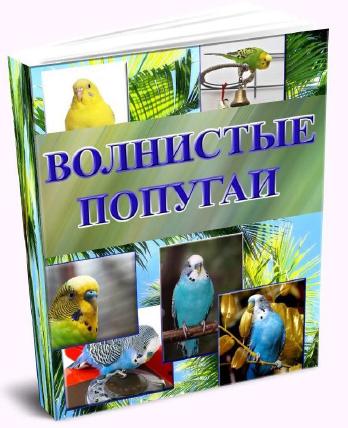 Все про волнистых попугаев