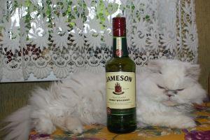 Культура употребления виски