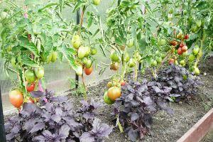 Правильное обустройство огорода