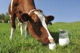 Бизнес-план молочно-товарной фермы на 200 гол. - 2015