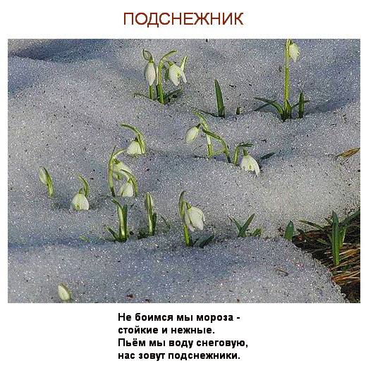 Poems about flowers with their photos