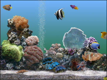 Screensaver Marine Aquarium 2.6 (full version)