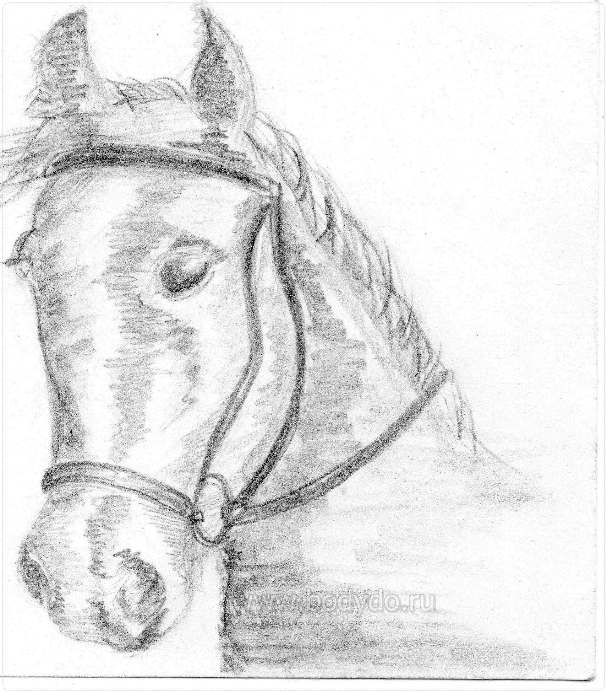 Digital picture Pensive horse 2019