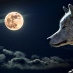 Советник Ночной волк
