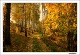 742 high resolution photo Autumn road in the woods