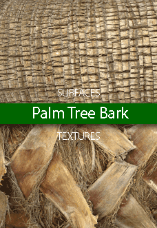Palm Tree Bark Surfaces