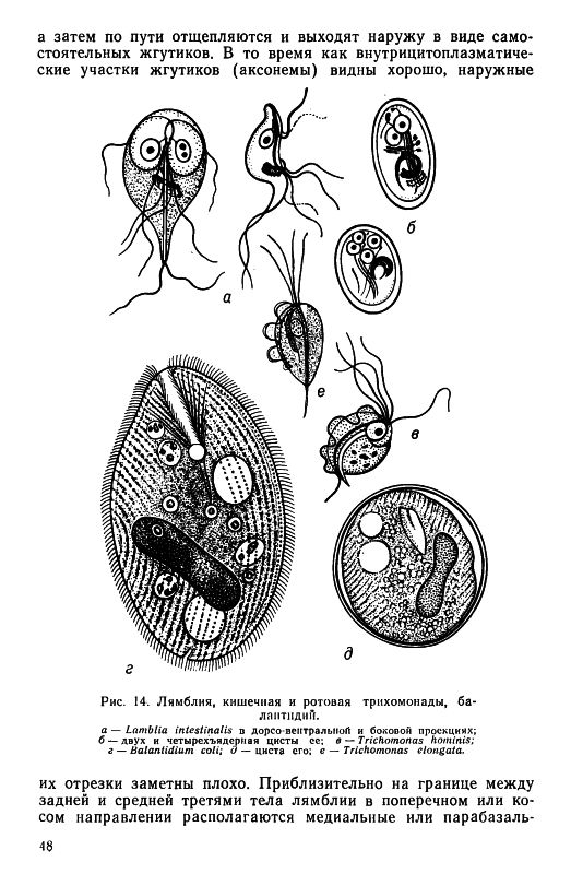 Practical Parasitology, 1977