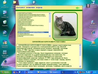 CATS - electronic encyclopedia of rock