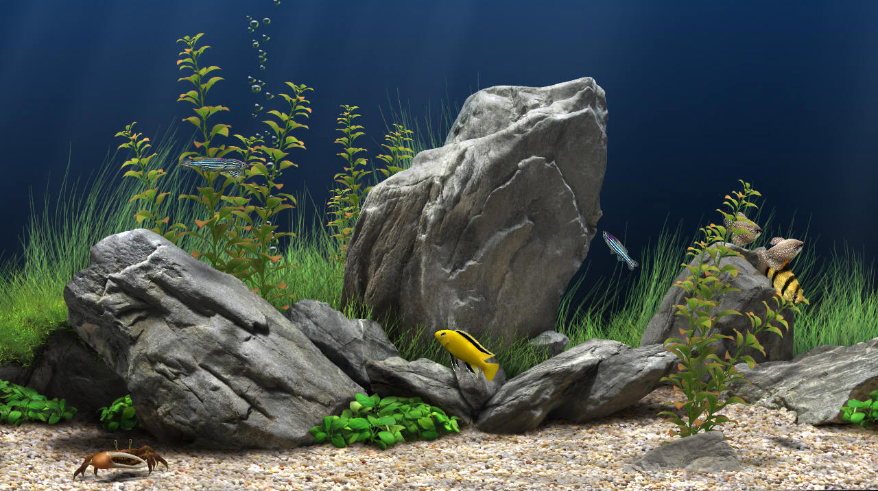 The best screensaver of a series of aquariums 3D