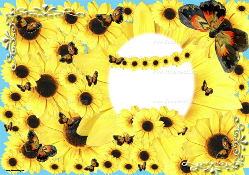 Collage Sunflowers
