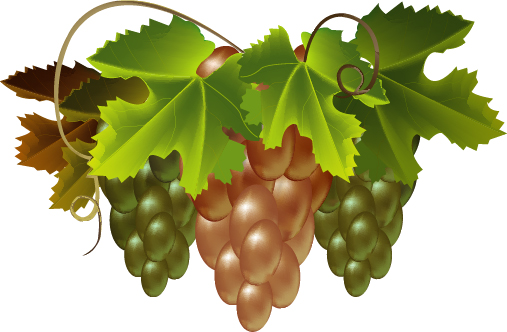Bunch of grapes. Vector Image.